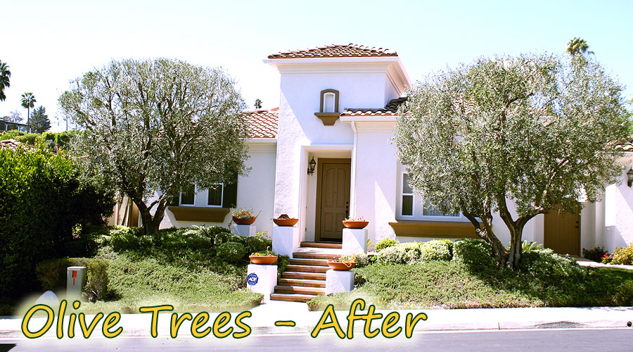 David 39 S Tree Service Before After Gallery David 39 S Tree Service